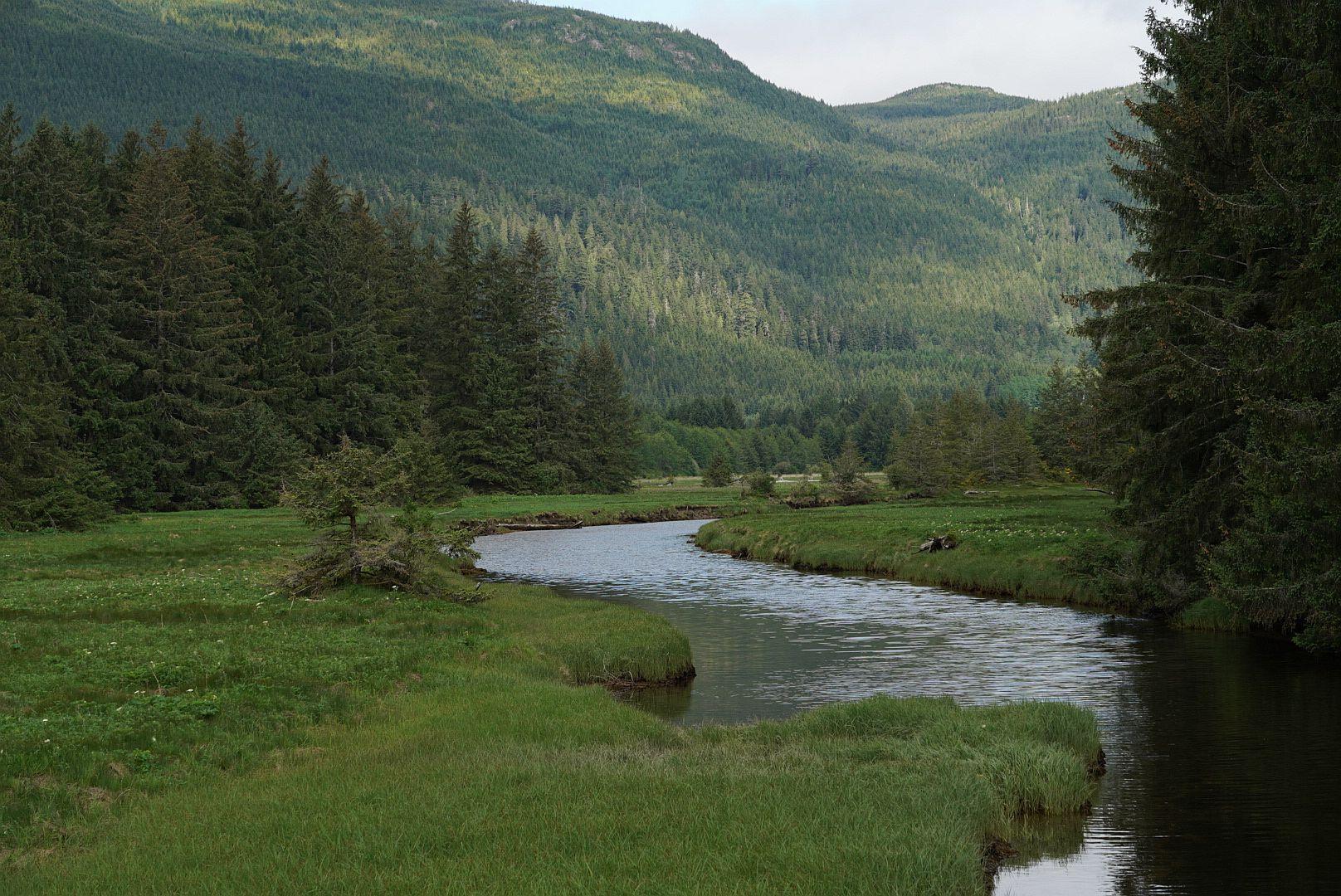 Berglöwen in Kanada